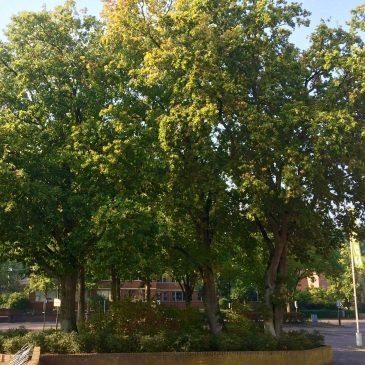 Bomen hebben voorrang op parkeerplaats